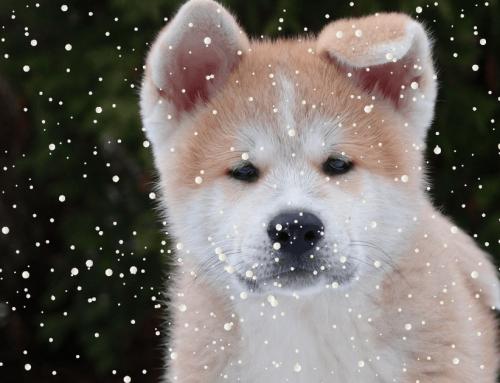 Vom Welpen zum Familienhund – Die 10 Life Skills  | Türchen 5 des TOP Trainer Adventkalenders 2017