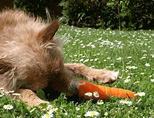Beschäftigung für zwischendurch: Weshalb Spiele gut für dich und deinen Hund sind