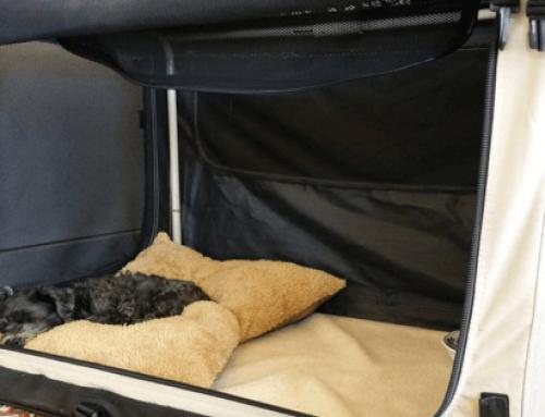 Die Hundebox – So nutzt du sie optimal für dich und deinen Hund!