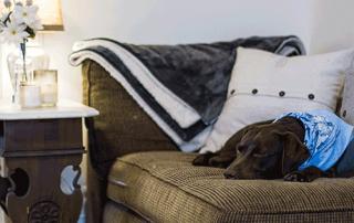 Hund-im-Bett-mobile
