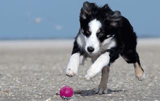 Hundespielzeug-mobile