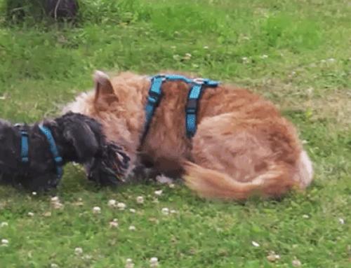 So erkennst du Spiel bei Hunden