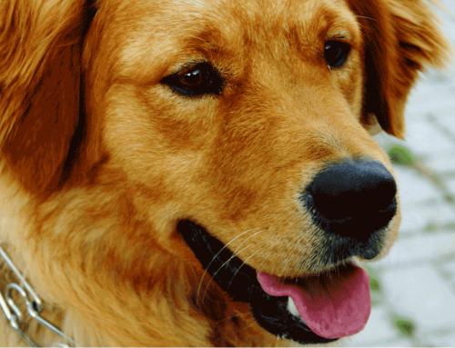 Verbotenes Equipment – Was darf nicht an den Hund?