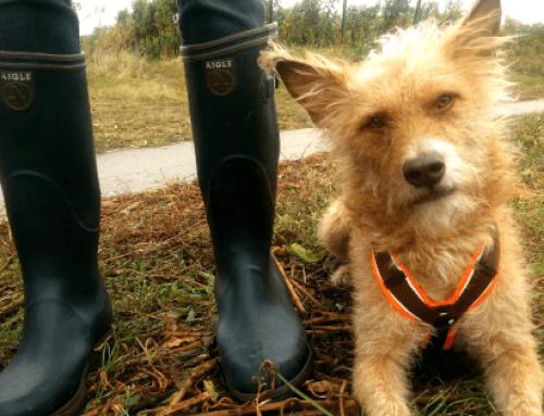 Wetterfest! Gassi gehen mit Hund im Herbst und Winter