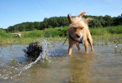Mathilda schüttlt sich im Wasser, Soki kneift deswegen die Augen zusammen