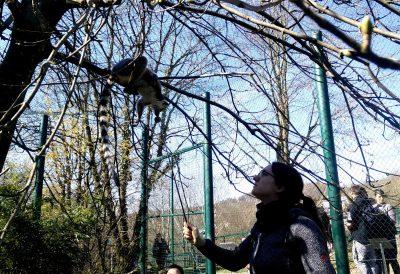 Lara beim Targettraining mit Lemuren