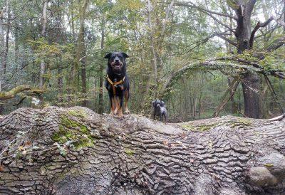 Mathilda und Samy am Baumstamm