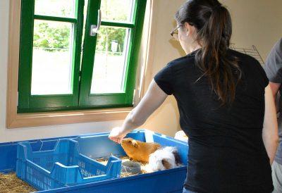 Lara beim Training von noch scheuen Meerschweinchen