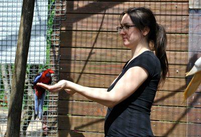 Lara mit einem Pennantsittich