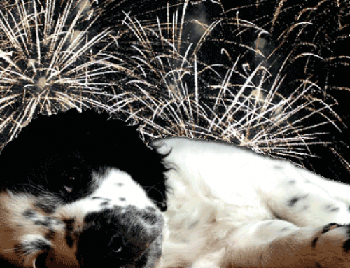 Silvester mit Hund – Last Minute Tipps