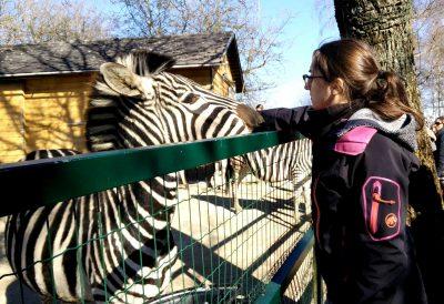 Lara beim Training mit einem Zebra