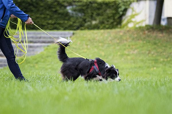 Mensch und Hund beim Mantrailing