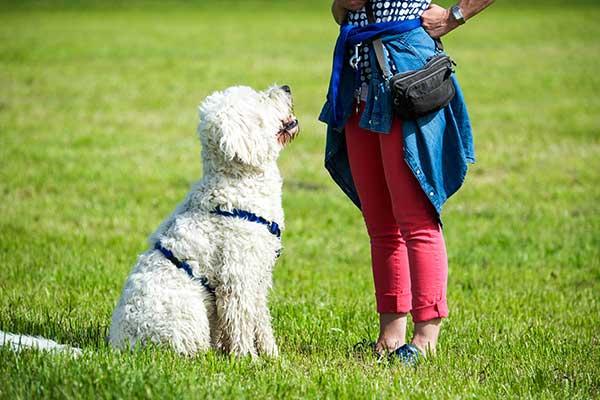 Hund sitzt vor seinem Menschen