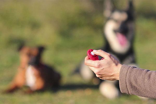 Clicker und Hunde im Hintergrund