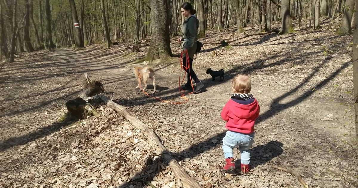 Kleinkind und zwei Hunde