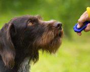 TSD Blog Verstärker im Hundetraining