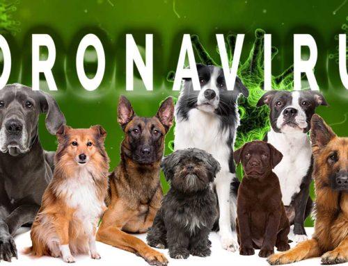 Hundehaltung in Zeiten des Coronavirus