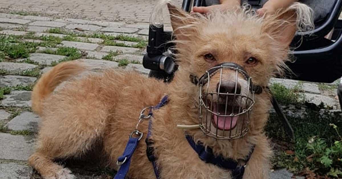 Hund mit Metallmaulkorb