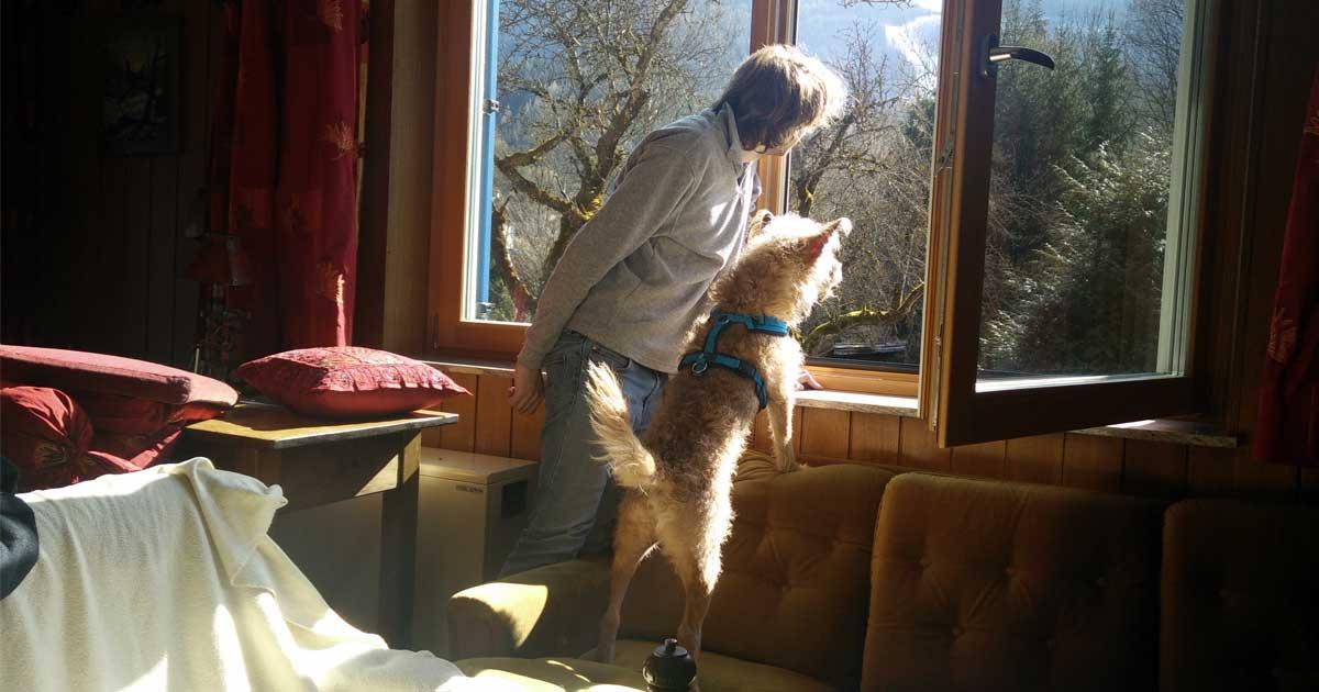 Mensch und Hund sehen aus dem Fenster