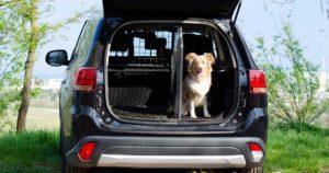 Ein Hund sitzt im Kofferraum, der zum Fahrgastraum und selbst durch Travall Hundegitter abgetrennt ist.