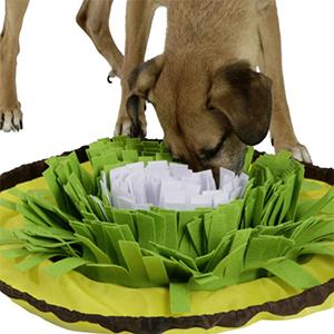 Ein Hund schnüffelt in der Schnüffelblume nach Leckerli.
