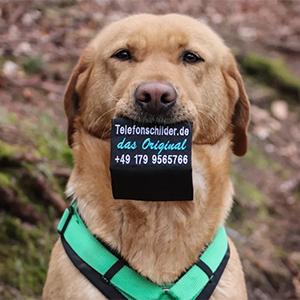 Telefonschild mit Hund